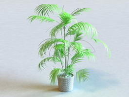 Potted Palm Tree 3d model