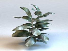 Fiddle Leaf Ficus Plant 3d model