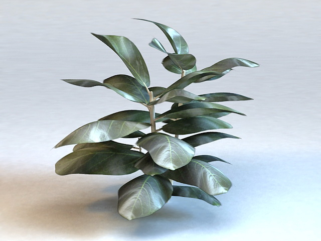 Fiddle Leaf Ficus Plant 3d model