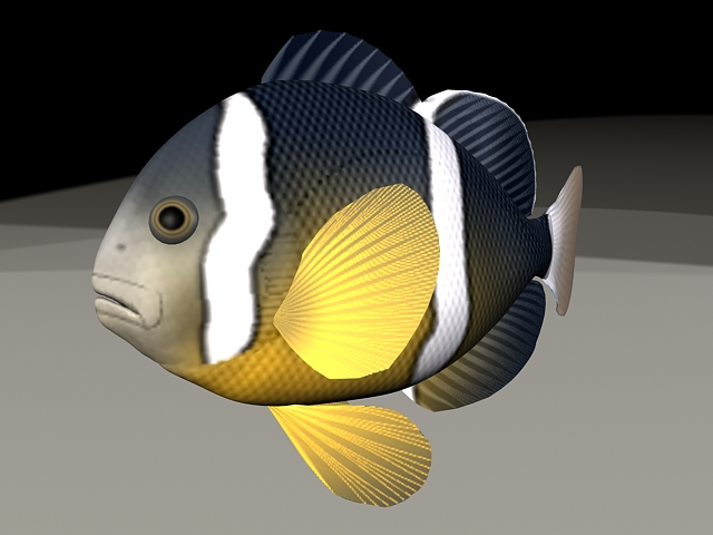 Clownfish Animated & Rigged 3d model