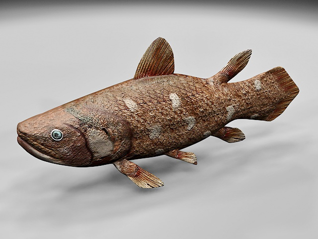 Coelacanth Fish 3d model