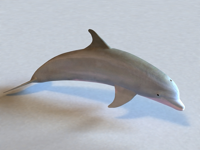 Atlantic Bottlenose Dolphin 3d model