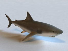 Lemon Shark 3d model