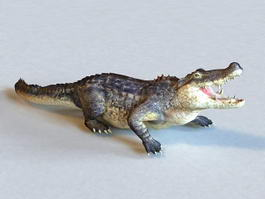 American Alligator Animated & Rigged 3d model