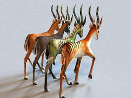 Animated Antelope 3d model