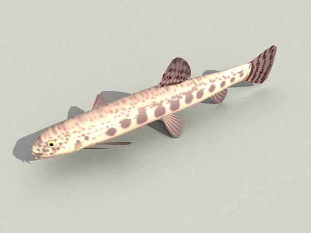 Loach Fish 3d model