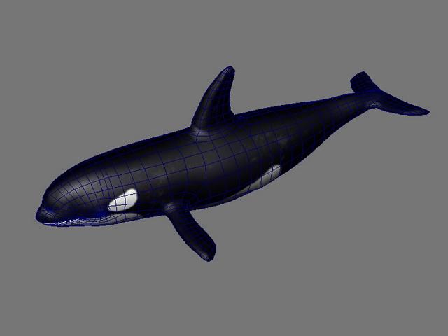 Orca Killer Whale 3d model