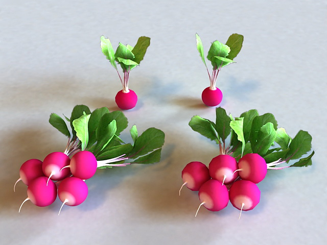 Growing Radishes 3d model