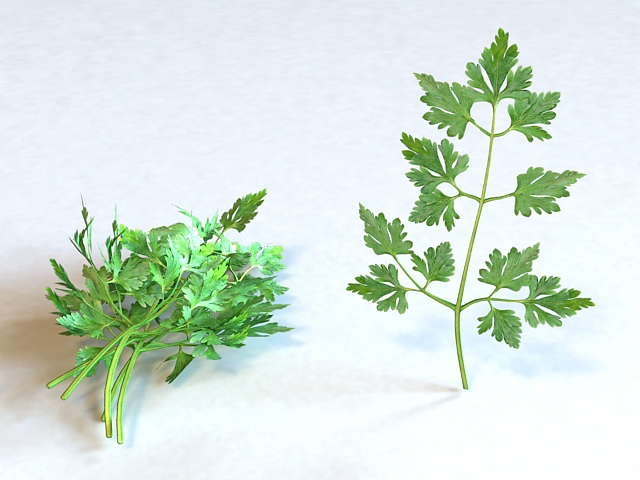 Fresh Parsley Leaves 3d model 3ds Max files free download - modeling