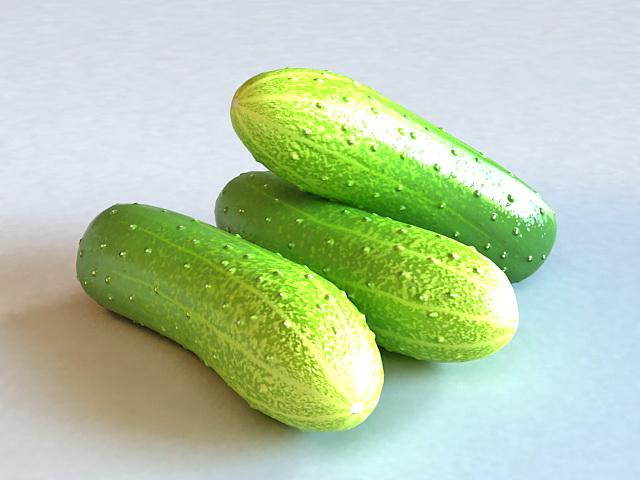 English Cucumbers 3d model