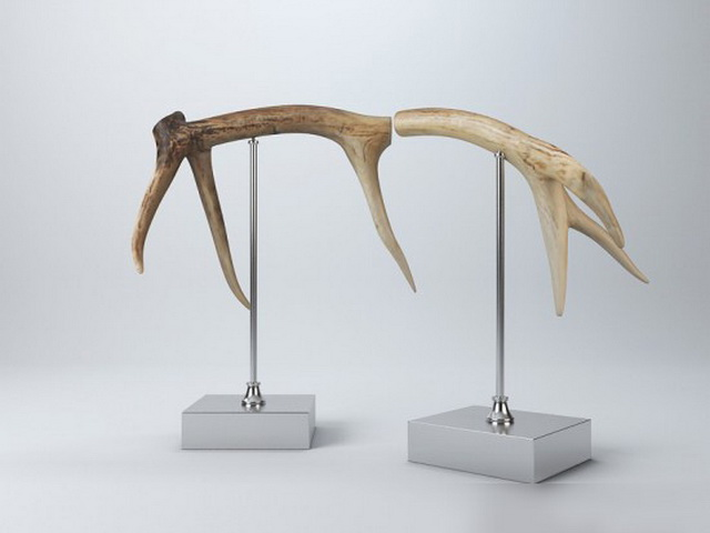 Deer Antlers Decor 3d model
