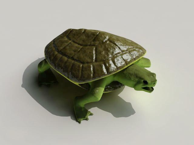 Musk Turtle 3d model