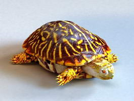 Ornate Box Turtle 3d model