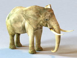 Male African Elephant 3d model
