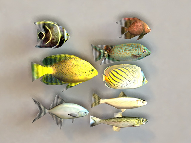 Marine Fish Collection 3d model