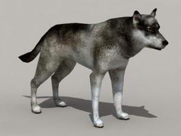 Animal Gray Wolf 3d model