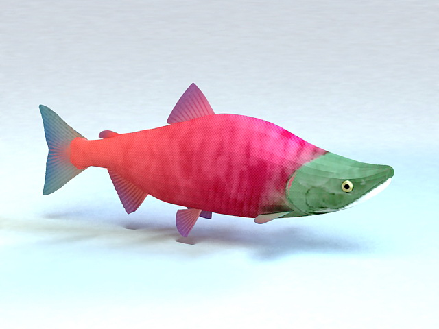 Alaska Sockeye Salmon 3d model