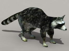 Black Raccoon 3d model