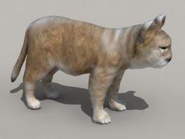 African Lion Cub 3d model