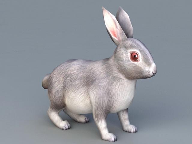 Rabbit Animal 3d model