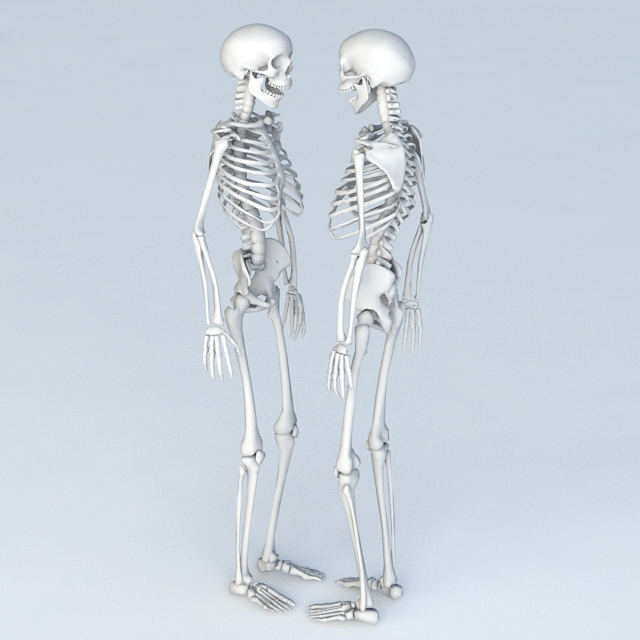 Full Body Skeleton Human 3d model Object files free download