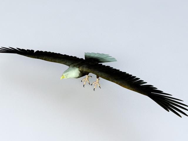 Bald Eagle Flying 3d model