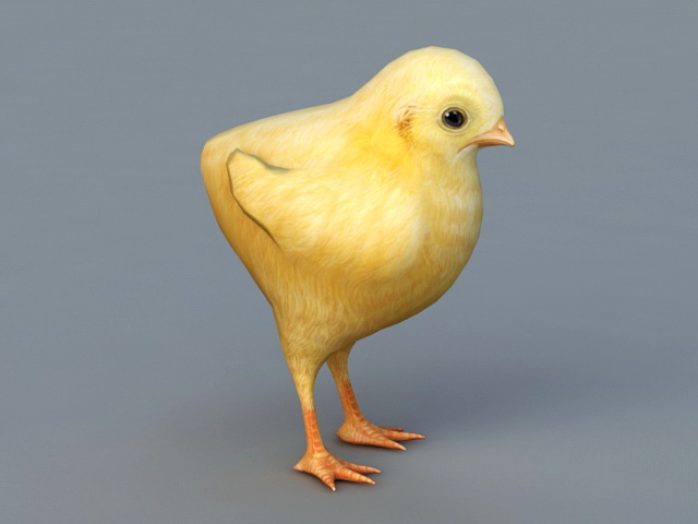 Cute Baby Chick 3d model