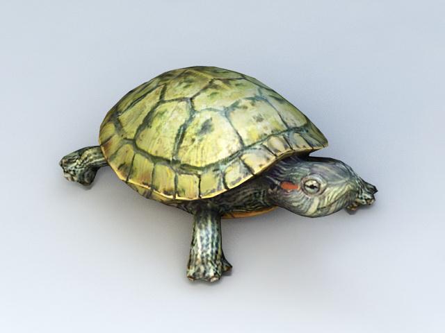 Water Turtle 3d model