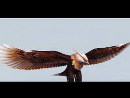 Soaring Eagle 3d model