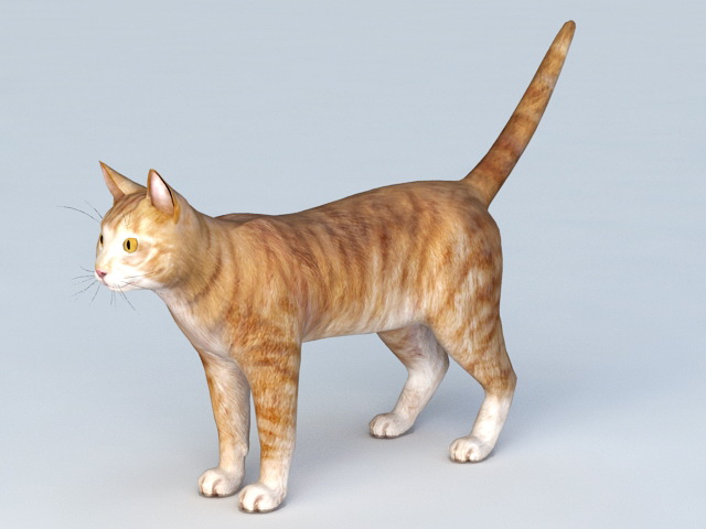 Household Pet Cat 3d Model Object Files Free Download