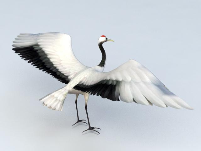 Red Head Crane Bird 3d model