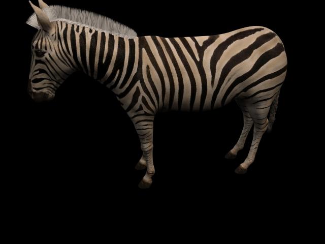 Grants Zebra 3d model