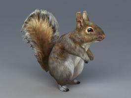 Grey Squirrel 3d model