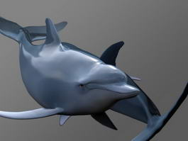 Swimming Dolphin 3d model