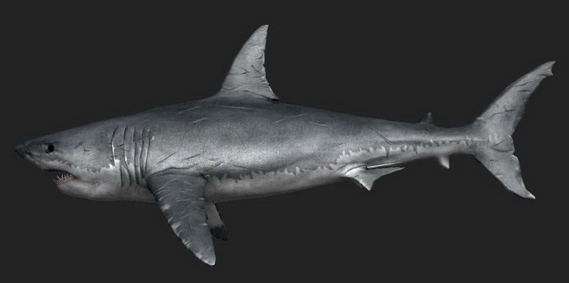 Great White Shark 3d Model 3ds Max Files Free Download