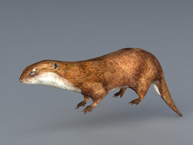 River Otter 3d model