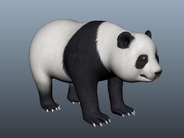 Giant Panda 3d model