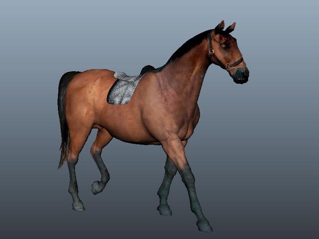 Arabian Horse 3d Model Maya Files Free Download Modeling