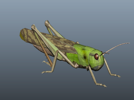 Green Locust 3d model