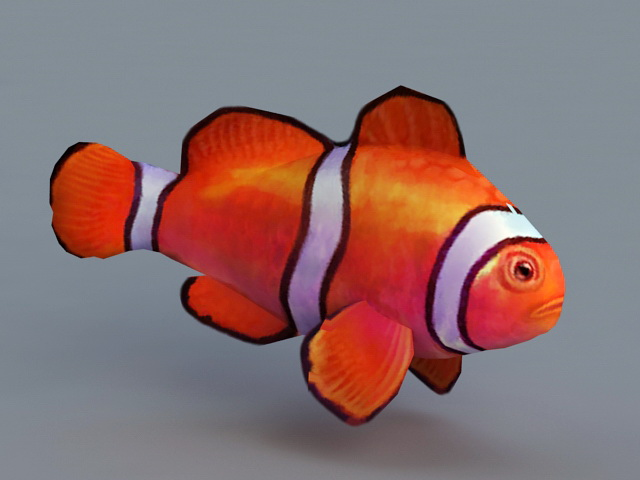 Animated Clownfish 3d Model 3ds Max Files Free Download