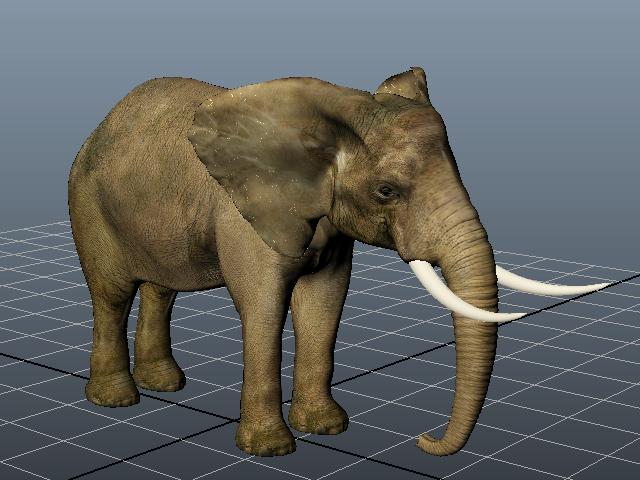 Indian Elephant 3d model