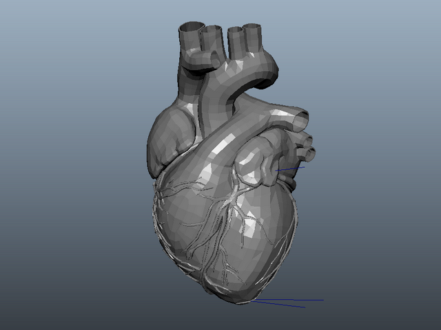 Animated Human Heart 3d model Maya files free download - modeling
