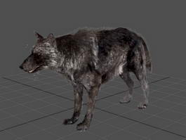Animated Black Wolf 3d model