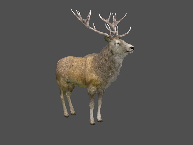 Animated Stag Deer 3d model