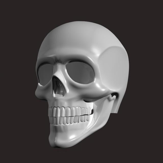 Human Skull 3d Model Maya Files Free Download Modeling