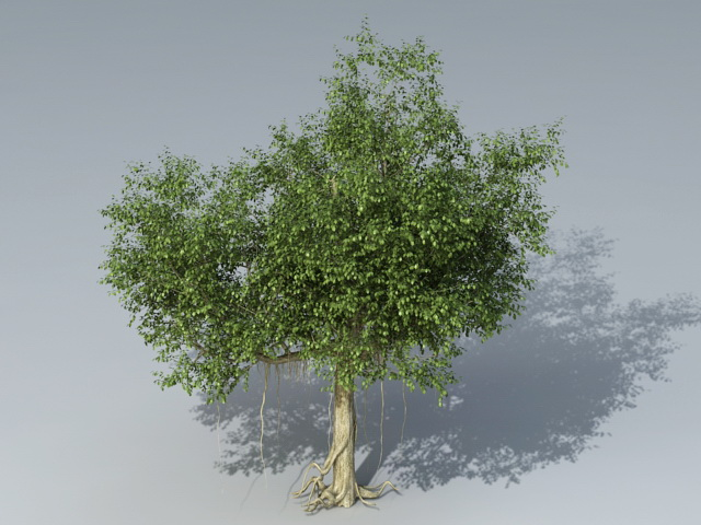 Banyan Tree 3d model 3ds Max files free download - modeling 40952 on