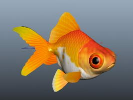 Fancy Goldfish 3d model