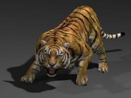Sumatran Tiger 3d model