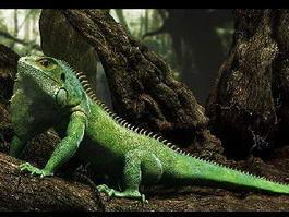 Green Anole Lizard 3d preview