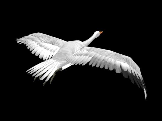 Flying Swan Bird 3d model